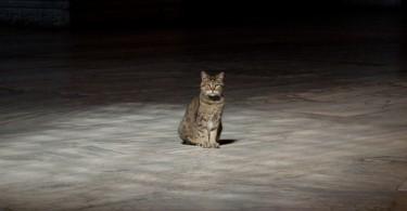 Gli the Cat of Hagia Sophia