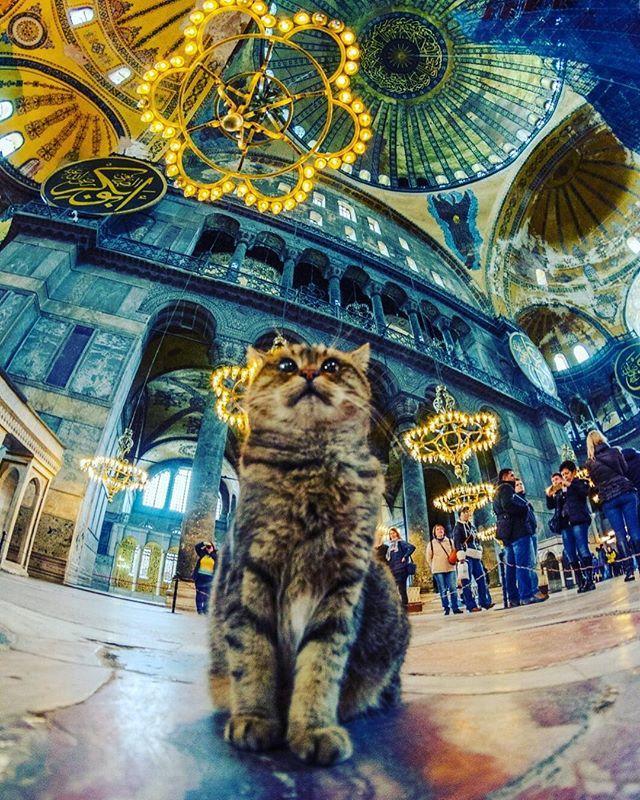 Gli the Cat of Hagia Sophia » Hagia Sophia